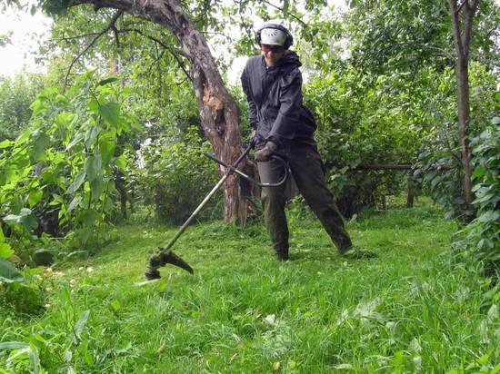 Правительство предложило изымать участки за нескошенную траву