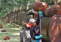 Казахстанцев приносят в жертву пальмовым королям
