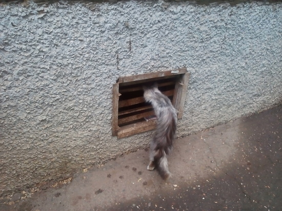 В одном из дворов Оренбурга разгорелся конфликт между кошатниками, ненавистниками животных и УК