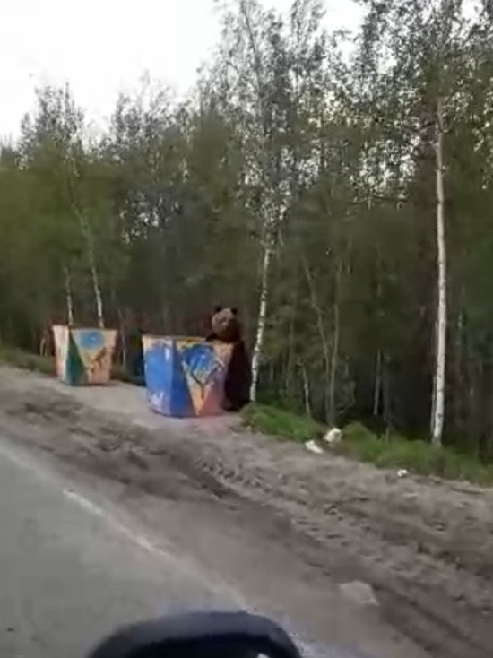 Еще одного медведя встретили жители Ноябрьска