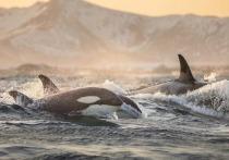 По делу о «китовой тюрьме» сочинский дельфинарий оштрафовали на 37 миллионов