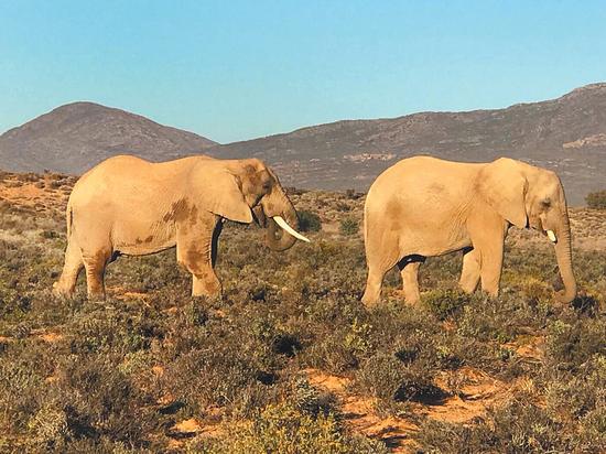 Сергей Ястржембский разоблачает убийц слонов: «Это страшный бизнес»