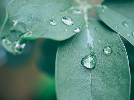 В пятницу на Смоленщине возможны дожди с грозами