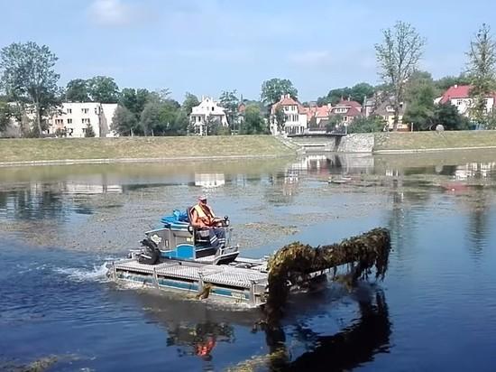 В Калининграде машина-амфибия очистит озеро Поплавок от водорослей