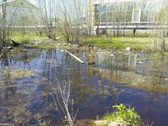 Утки плавают в «луже» с мусором в Лабытнанги