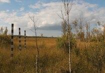 Псковская область оказалась среди лидеров по цифровой открытости памятников природы
