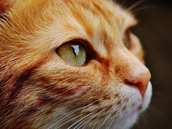 Кемеровский таксист жестоко убил котенка на глазах прохожих