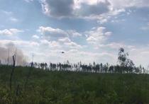Площадь лесных пожаров в Рязанской области выросла вдвое, объявлен режим ЧС