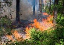 Пожар в Зубово-Полянском районе Мордовии локализован