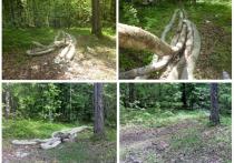Мужчина встретил «анаконду» в Югре
