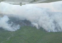 В Рыбновском районе из-за лесных пожаров сохраняется режим ЧС