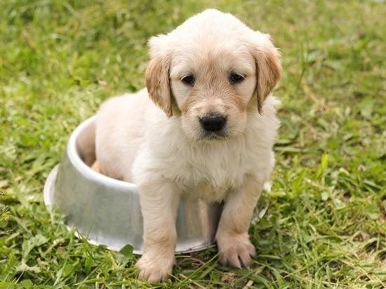 Россельхознадзор оштрафовал тульского бизнесмена за собачий корм
