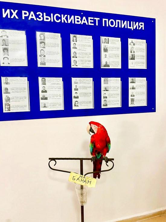 У нелегальных фотографов в Анапе изъяли двух обезьян и попугая