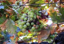 СМИ сообщили о возможной подготовке к запрету грузинского вина