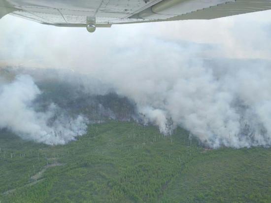 В Рязанской области горят леса, в одном из районов введен режим ЧС