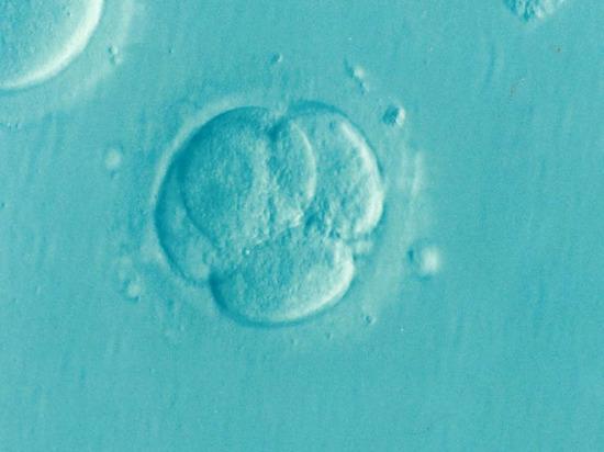 РПЦ обнародовала документ об эмбрионах и абортах