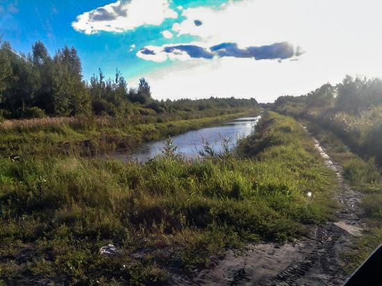 Власти предложили многодетным семьям жить на болоте