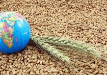 Правильное зерно из Оренбургской области поедет заграницу
