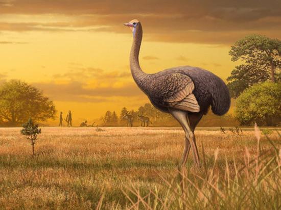 В Крыму обнаружили останки крупнейшей птицы Северного полушария
