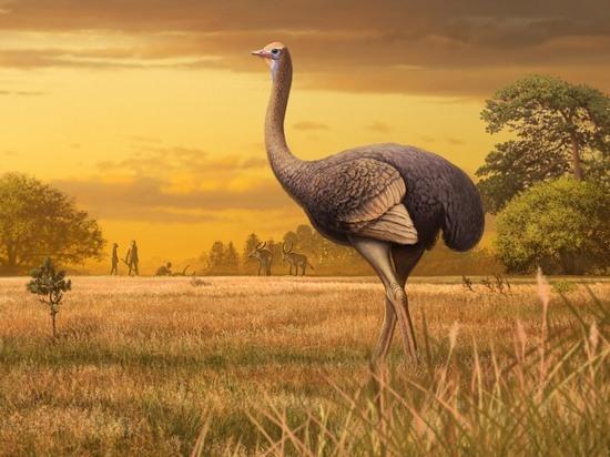 В Крыму обнаружена ископаемая птица: в три раза больше, чем страус