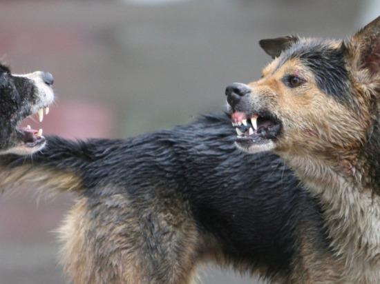 В Балтийске сотрудник полиции спас девушек от бродячих собак