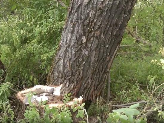 Жители микрорайона Шелковка в Кимрах оказались в опасности из-за черных лесорубов | Видео