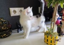 Двухмесячному котенку по имени Зая, которого две недели назад спасли от неминуемой гибели, нужны заботливые хозяева