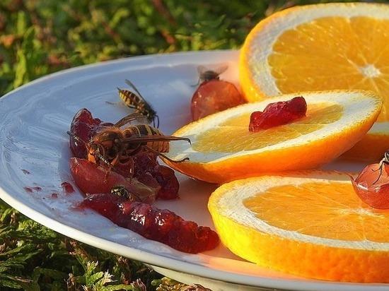 Названы способы избавиться от последствий укусов насекомых