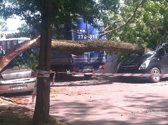 В Калининграде у Верхнего озера упавшее дерево раздавило автомобили