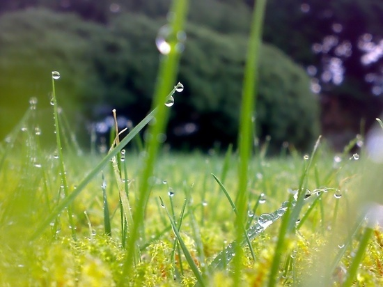 В Калининградской области с 1 июля похолодает и пойдут дожди