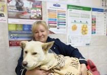 Жители Ковдора спасли израненную собаку