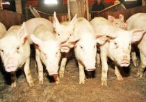 Ровно 10 лет назад на Байкальском экономическом форуме были подписаны инвестиционные соглашения о строительстве свинокомплекса и птицефабрики в Бурятии