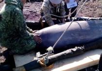 Узников «китовой тюрьмы» выкинули в море, считают экологи