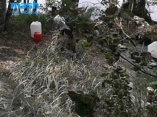 Озеро Сиркиярви отравили неизвестным химическим веществом