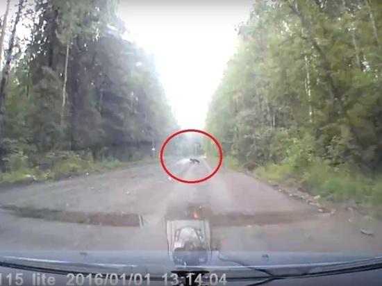 Медвежонка заметили в километре от «Ленты» на Кукковке