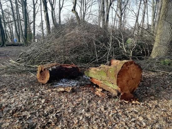 Калининградских чиновников оштрафовали за 120 поврежденных деревьях в парке Кроне