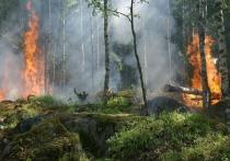 В Донбассе начался пожар в заминированном лесу