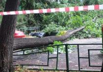 Бабушка мальчика, убитого деревом в Москве: «Умер моментально»
