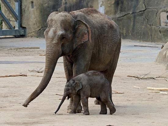 Слонам – педикюр, бегемотам – вентиляция: разработаны новые требования к содержанию животных