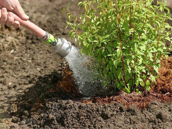 В Михайловской роще продолжается озеленение
