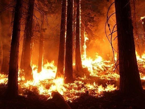 Огромные природные пожары в ЯНАО сожгли 48,5 га леса за сутки