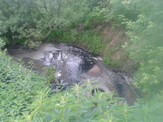 Город открытой канализации: Томь стала «убийцей» сибирской рыбы