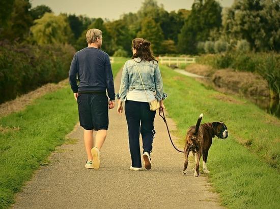 Чиновники проверяют, соблюдают ли кировчане правила выгула собак
