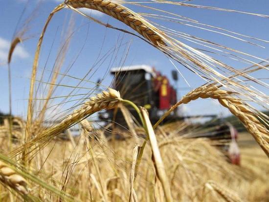 В Калмыкии по объемам уборки зерна лидируют яшалтинцы