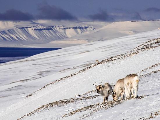 Эксперт высмеял арктические амбиции Украины