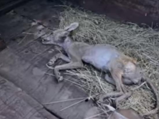 Украинский крестьянин убил не известное науке животное