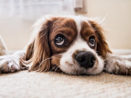 Запашные привезут в петербургский приют более 200 кг собачьего корма