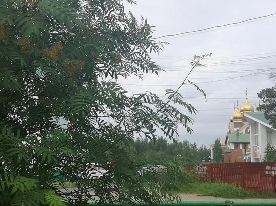Синоптики снова и снова предупреждают о сильном ветре в Ноябрьске