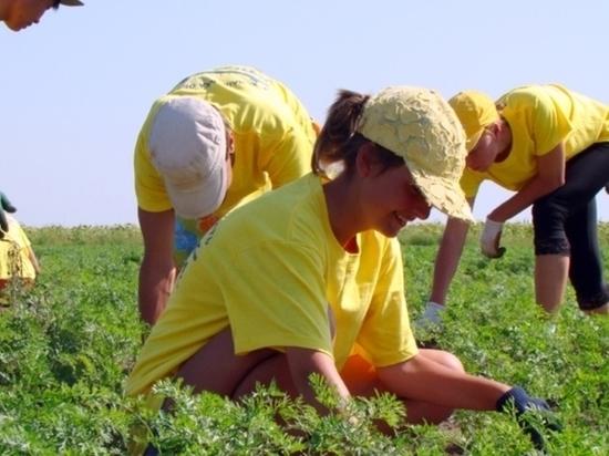 Калмыцких школьников трудоустраивают на каникулах