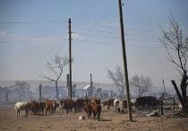 Главы районов Забайкалья очистили чабанские стоянки «в кредит»